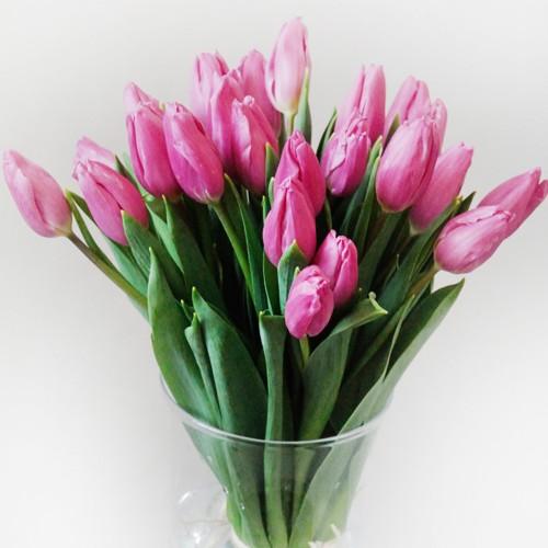 Bukiet 25 tulipanów