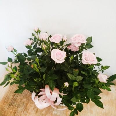 Kosz kwiatowy Dla Ciebie