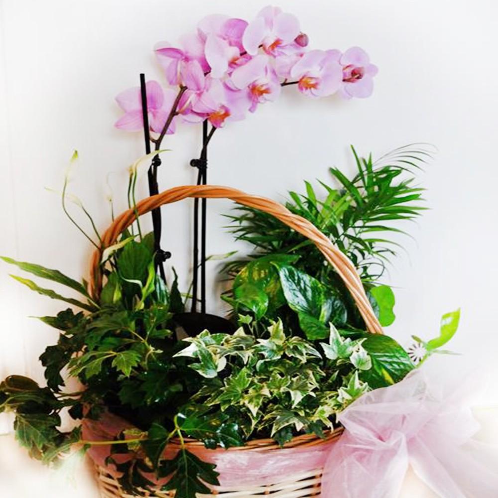 Kosz kwiatowy egzotyczny