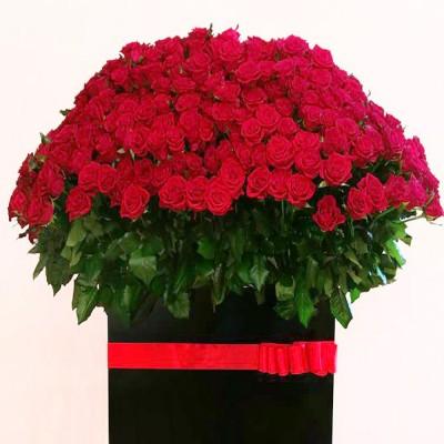 Wszystkie róże świata